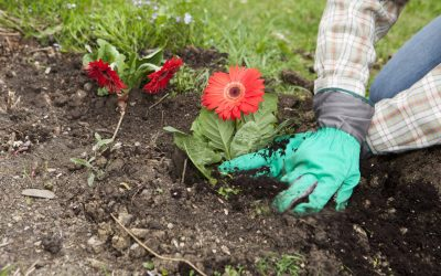 5 Tips for Springtime Planting in South Carolina