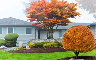 4 Landscaping Design Tips to Consider Now